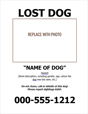 lost dog signs templates