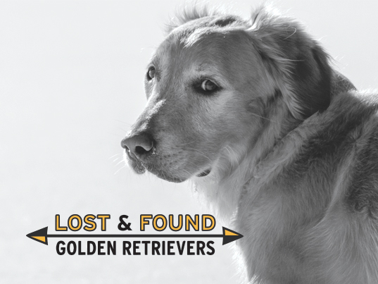 Lost and Found Goldens